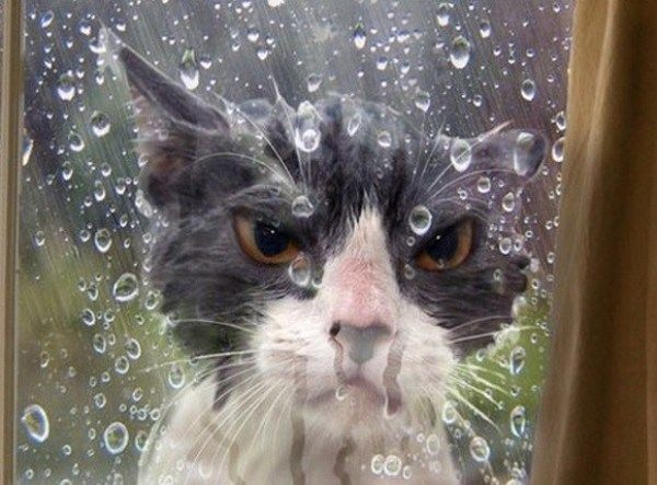 Ten Angry Wet Cats You Might Want To Hide From Cat Jokes Funny