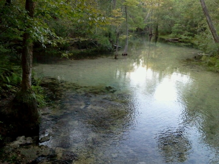 17 Best Images About Econfina Creek River Spring On