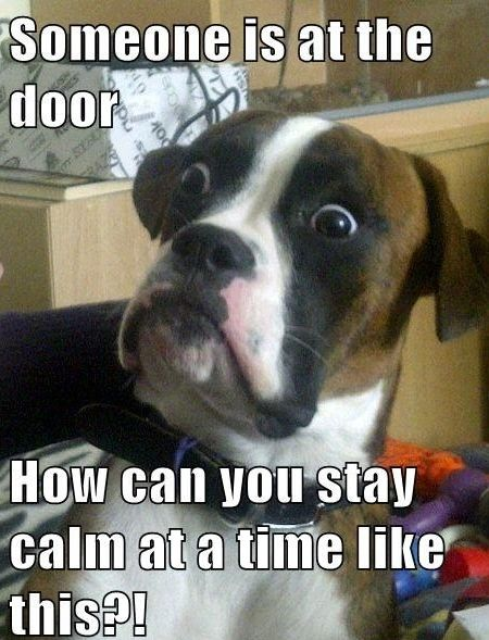 This is my dog.... every effing time someone knocks at the door or pulls into our driveway or the neighbors driveway. Everything. Ok he barks at EVERYTHING.