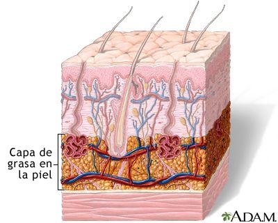 La capa de grasa de la piel está localizada en la capa subcutánea del tejido llamada hipodermis. El espesor de esta capa, que varía enormemente de una persona a otra, depende del tamaño y número de las células de grasa.... http://drzavala.myshaklee.com/us/es/