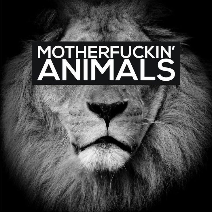 Animals- Martin Garrix