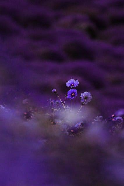 #Purple beauty