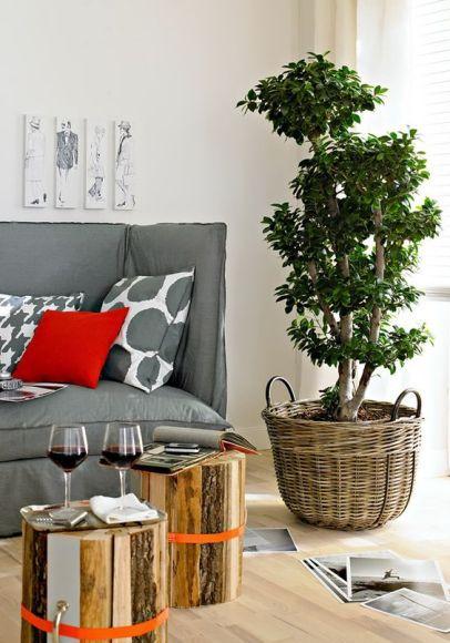 Подберем комнатные и офисные растения для дома, квартиры и офиса