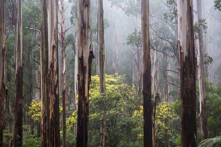 mist-trees-dandenong-ranges.jpg (1024×683)