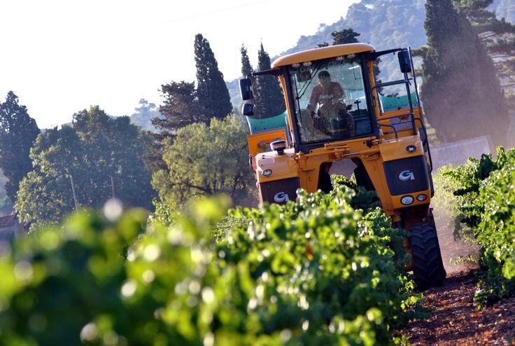 Vendanges 2015 en Provence (vendanges mécaniques).