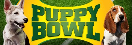 Animal Planet's Puppy Bowl is the canine version of football - Puppy Superbowl! The whole family can watch puppies ham it up in puppy games from the gridiron of Animal Planet Stadium. Shop Puppy Bowl merchandise like puppy clothing or the Puppy Bowl DVD so you can watch these adorable pups on repeat or visit us at Puppy Bowl online.