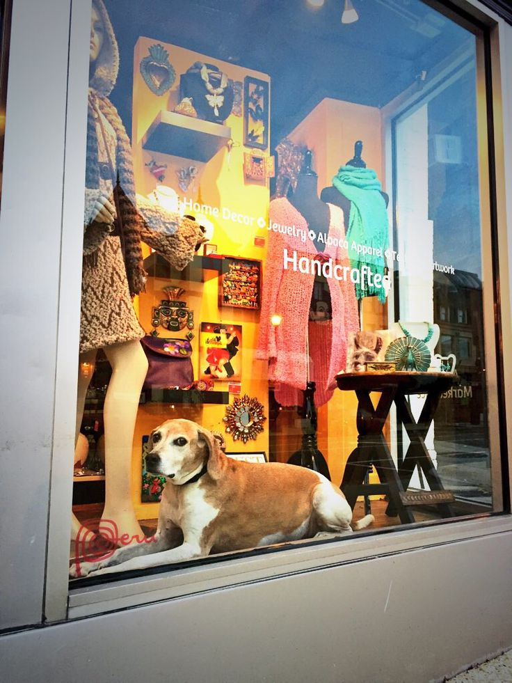 Angelito says... We are always a pet-friendly shop!