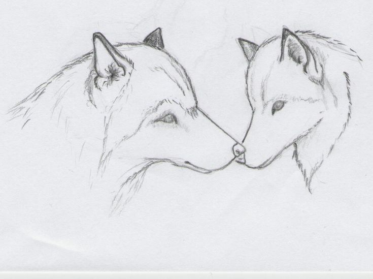 easy drawing of animals   Wolf Sketch by greywolves-redroses