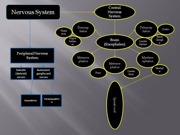 Concept Map (Nervous System) Science, Philosophy