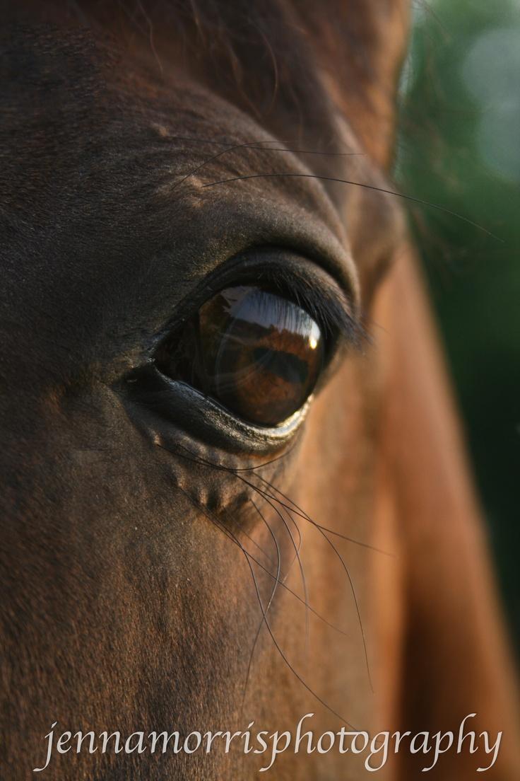 Equine Eye Anatomy