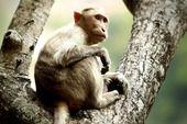 By Uma Mahesh #wildlife #safarious