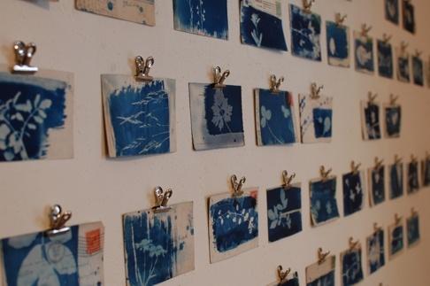 Hannah Lambs cyanotypes