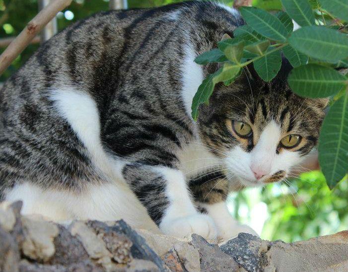 Kittykatt <3