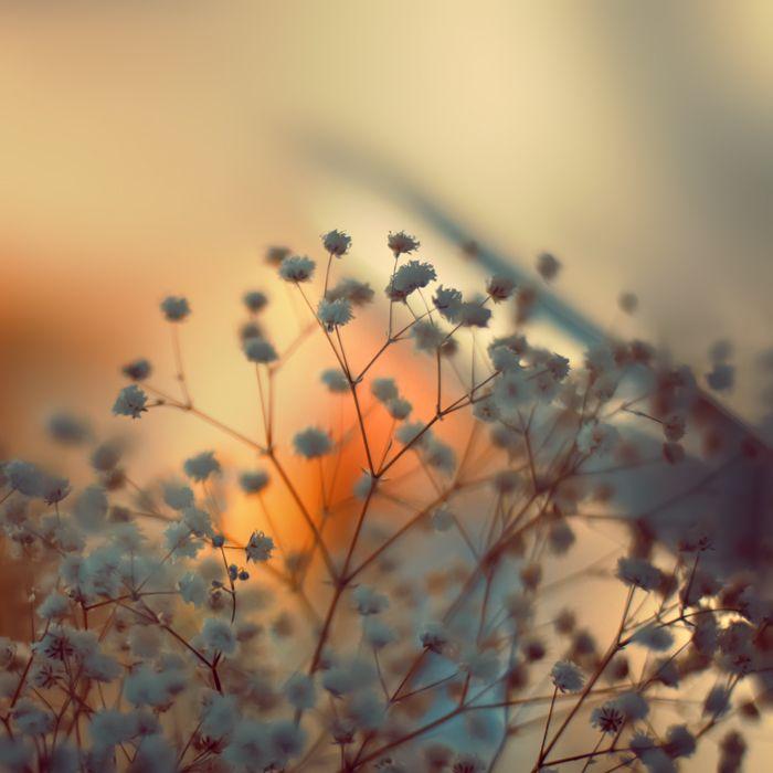 Late Summer by Sortvind