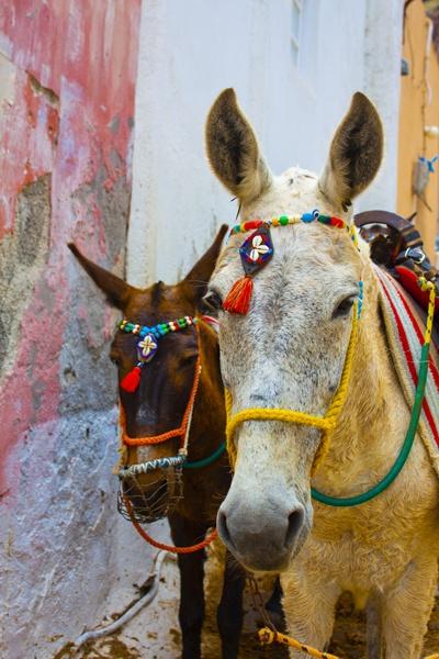 Santorini Island, Cyclades,Greece, Thira, Donkeys, Amazing Greece, Удивительная Греция