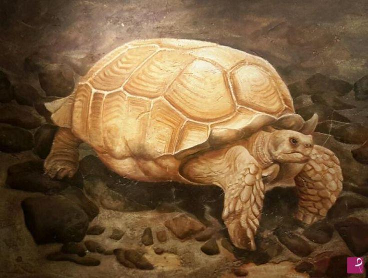 La vecchia tartaruga. .... di Lucia  Amadio