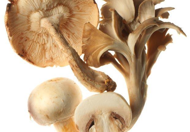 Infecciones Hongos - 5 alimentos excelentes para reforzar el sistema inmunológico. 3-Hongos. Los hongos asiáticos (incluidos los shiitake y los hongos ostras) contienen betaglucanos, carbohidratos que estimulan la producción de glóbulos blancos, que atacan los virus. Los champiñones blancos son ricas fuentes de selenio y riboflavina (vitamina B2), que ayudan a prevenir las infecciones bacterianas. (champiñones) Investigadora Médica, Nutricionista, Consultora de Salud y Ex Paciente de I...