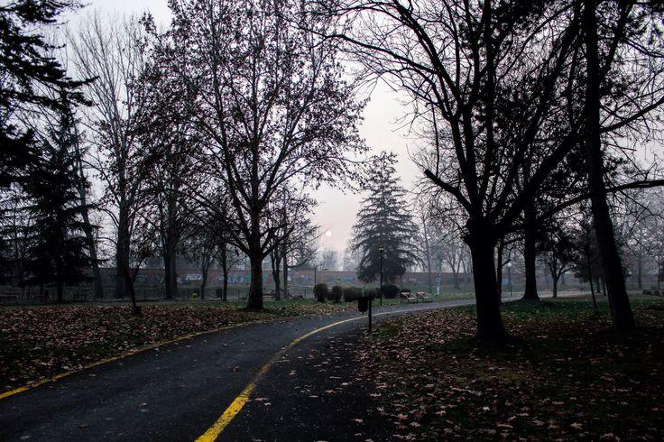 Woods, parks