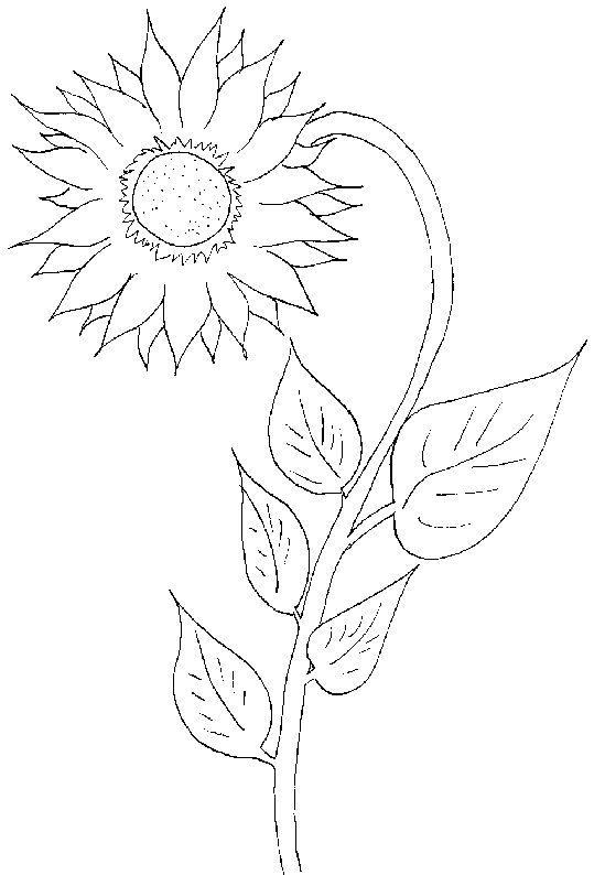 Coloriage Fleurs et plantes ! | Dessin de tournesol, Coloriage et Coloriage fleur