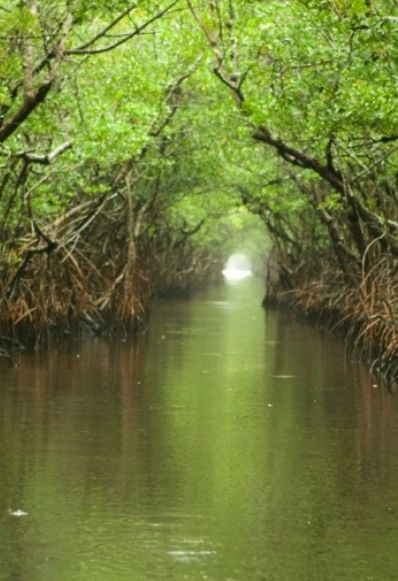 EVERGLADES NATIONAL PARK, United States- protects the southern 20 percent of the original Everglades. It is the largest tropical wilderness in the United States & the largest wilderness of any kind east of the Mississippi River. It is visited on average by 1 million people each year & is the third-largest national park in the lower 48 states after Death Valley & Yellowstone. Regular flooding about 3000 BC brought subtropical plants from northern Florida & tropical seeds carried by birds…