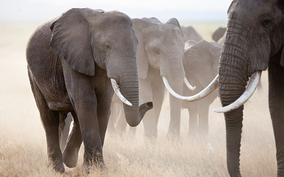 Come with your family and enjoy #KenyaSafariTours&Holidays. It gives more knowledge about wildlife safari and makes your tour enjoyable. Find out more @ http://kenya-safaris.co/
