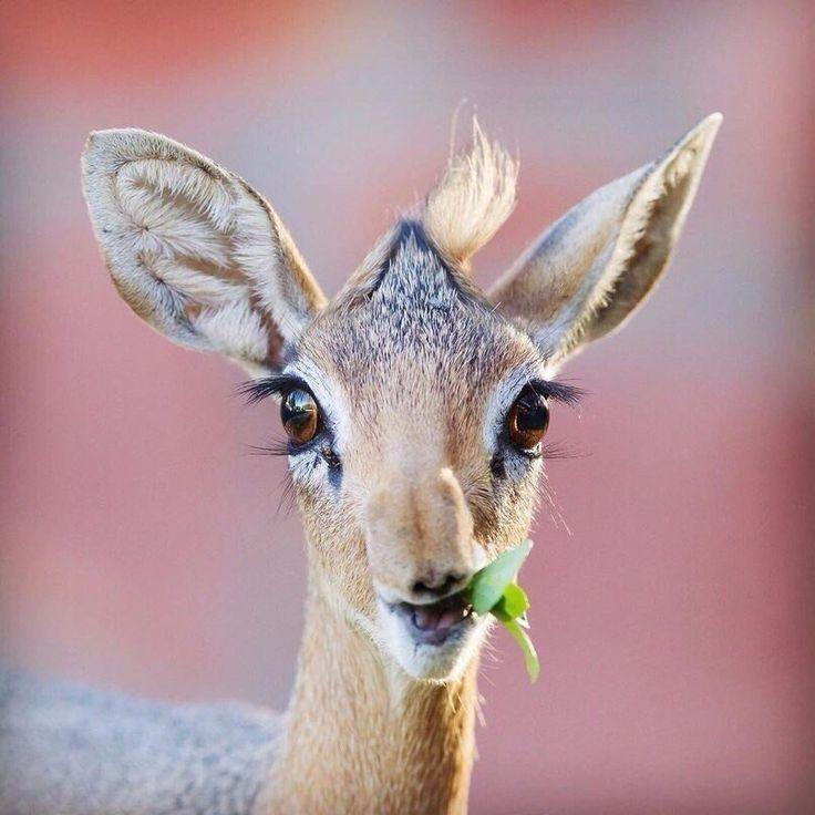 лиана картинки животных с ресницами скайп, через значок
