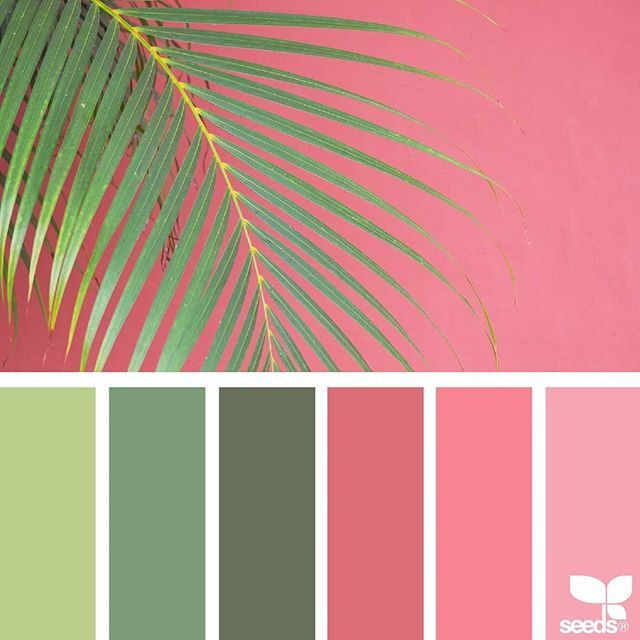 today's inspiration image for { color frond } is by @rotblaugelb ... thank you, Julia, for another amazing #SeedsColor image share!