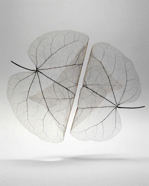 +++ - cargocollection: Autumn Leaves Transparent