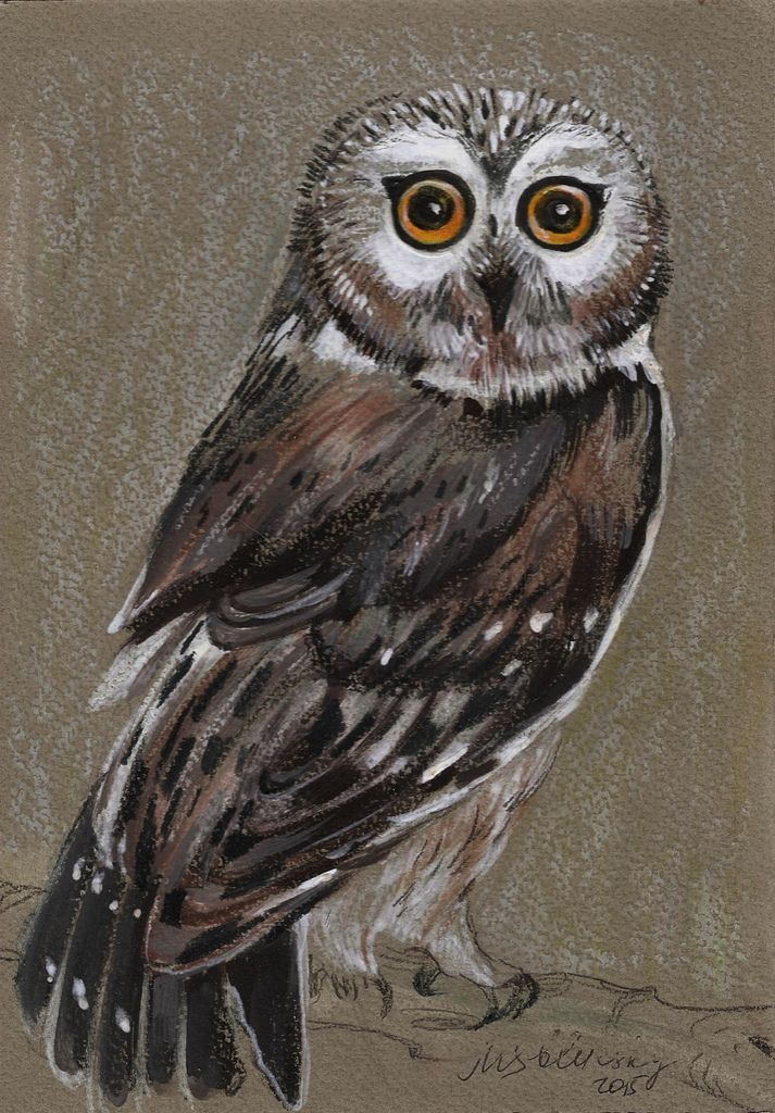 photo owl1.jpg