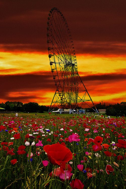 Poppy Field Ferris Wheel, Japan  photo via loves
