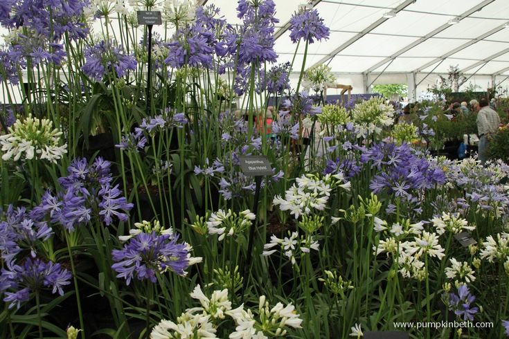 There are many local plant sales, fetes and opportunities to buy wonderful, locally grown plants at fantastic prices, or even to swap for free!  Rare, hard to find and unusual plants can be found at the specialist plant fairs listed below.  In this list I have included large plant sales, such as the plant sale …