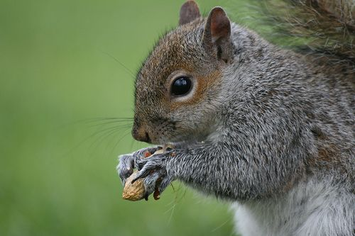 wikiHow to Raise a Baby Squirrel -- via wikiHow.com