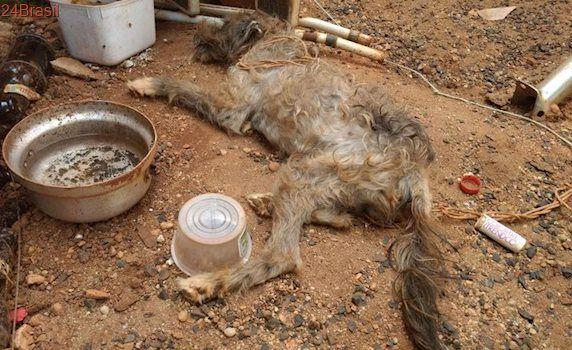 Mulher presa em flagrante por maus-tratos de cão em Uberlândia