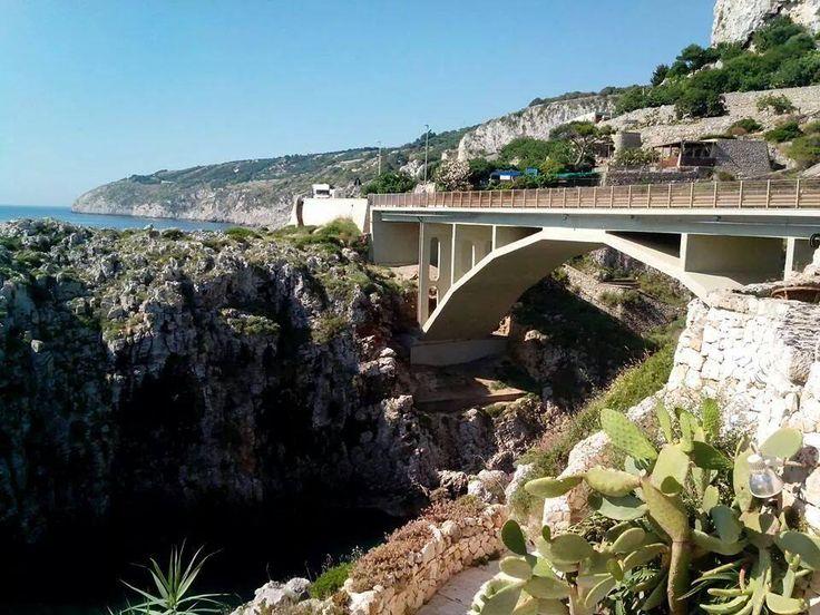 Ponte ciolo_tenuta del morige