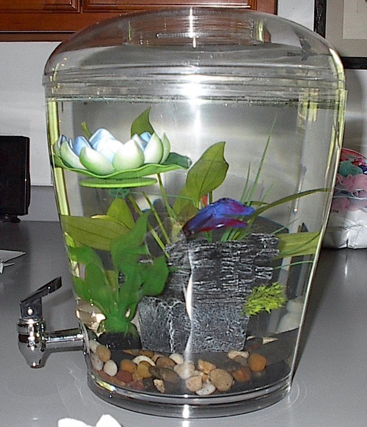 16 best unique fish tanks images on pinterest fish tanks for Unique betta fish tanks