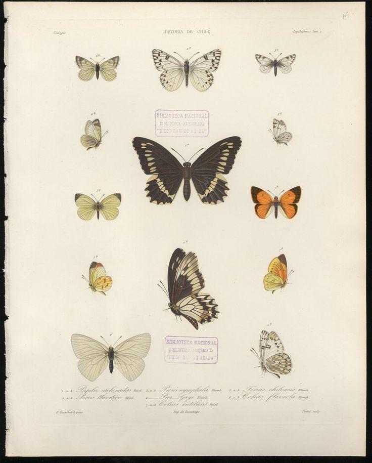 Atlas de la Historia Física y Política de Chile [Láminas, Volumen 2] — Visor — Biblioteca Digital Mundial