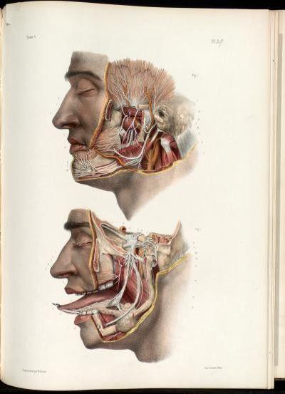 Jean-Baptiste Marc Bourgery  (1797-1849 https://pinterest.com/pin/287386019948321810), Nicolas Henri Jacob. [Traité complet de l'anatomie de l'homme comprenant la médecine opératoire (1831-1854  https://pinterest.com/pin/287386019941966857/ )].