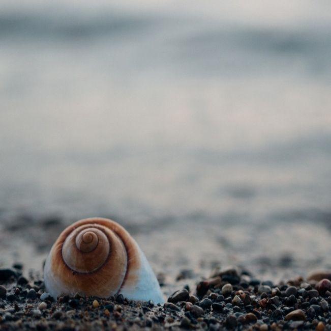 La iniciativa surge de la Fundación Surfrider dedicada a la protección y disfrute de los océanos suma 25 años