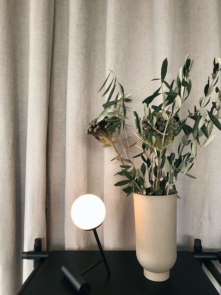9 besten plantas Bilder auf Pinterest | Balkonkästen, Blume und ...