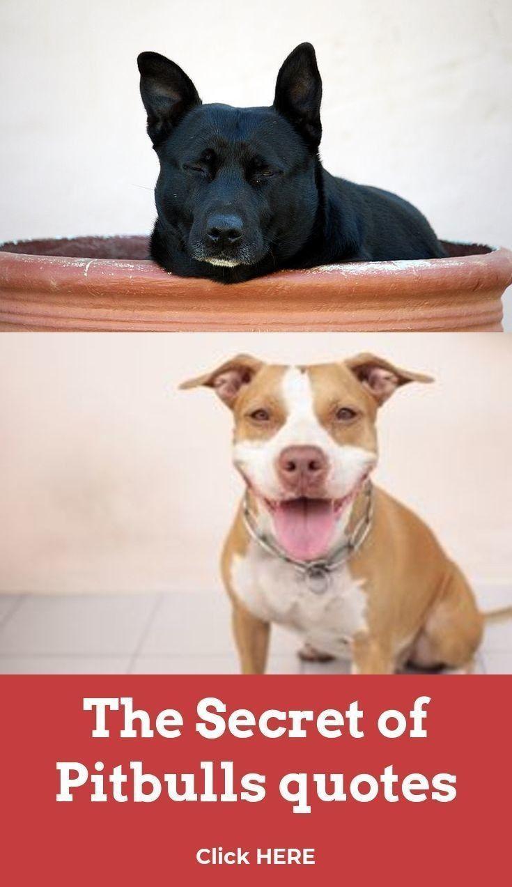 Dog Names Male Dog Names Male In 2020 Dog Names Dog Names Male Pitbull Dog