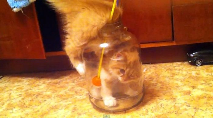 how to keep a cat from peeing on things