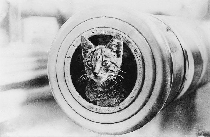 The feline mascot of the light cruiser HMS Encounter, peers from the muzzle of a 6-inch gun.