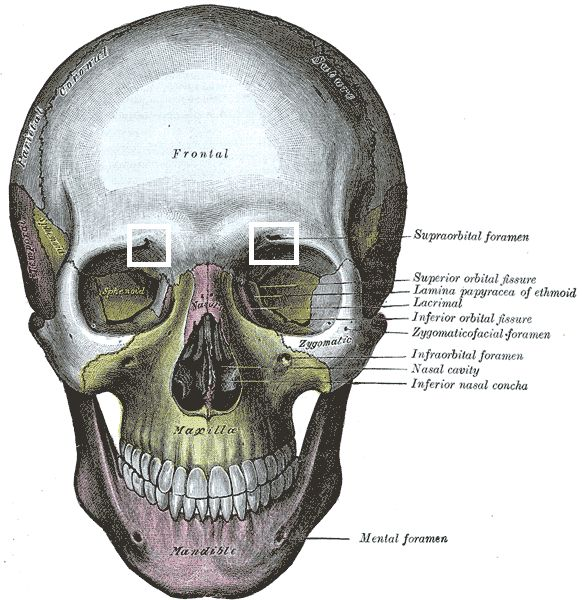 60 best images about medical on Pinterest