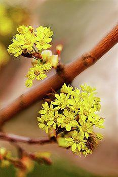 Flowering plants - brings people good spring by George Westermak#George Westermak#flowers#FineArtPrints#homedecor