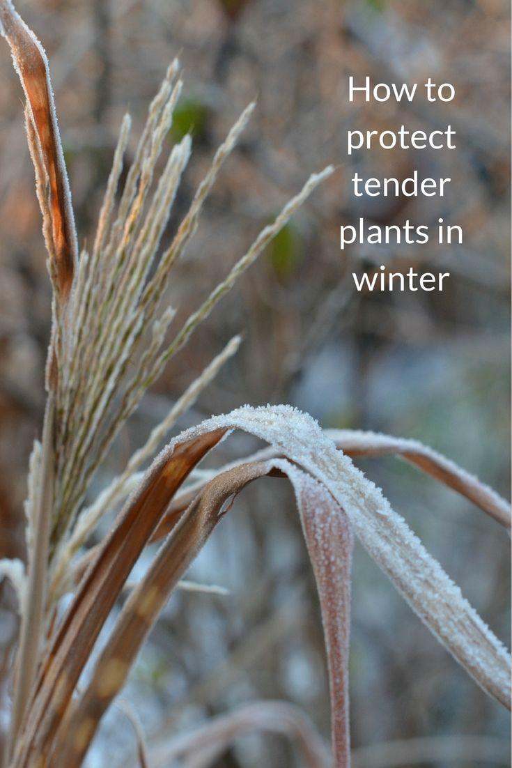 31 best winter gardening images on pinterest winter garden
