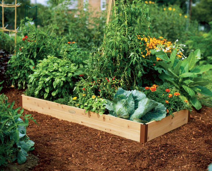 1000 images about raised beds for tomatoes on pinterest - Safest material for raised garden beds ...
