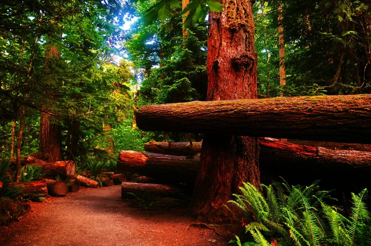 Cathedral Grove - near Port Alberni, British Columbia