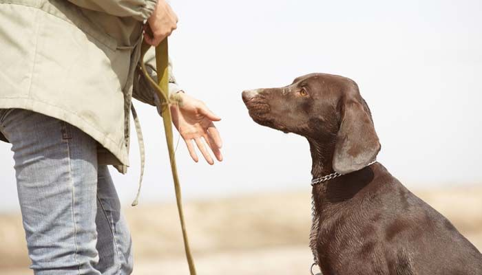 Whether you've just recently decided add another family member to you home or have had your puppy for a little while now, a smart next step would be to bring your pet to best obedience school for dogs. Dog owners know that puppies, like children, need training and discipline for their own benefit. #dogschools #dogtraining #schools #pets #dogs #training #dogtrainer