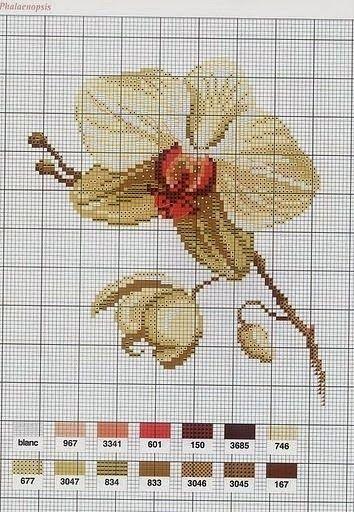 ♥Meus Gráficos De Ponto Cruz♥: Flores: Belas Orquídeas em Ponto Cruz