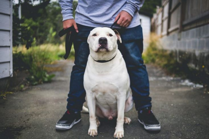6 signs your dog trusts you with his life dogs trust